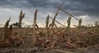 Climate change may spur intense droughts. If a drought kills a farmer's crop, a farmer insured with crop insurance will likely get a pay out. The following year, that same insurance policy may cost more. Both the farmer and the US government help pay for that insurance policy. Also, it means our grocery prices will likely skyrocket due to food shortages. It's a fun domino effect. Photo courtesy of USDA.