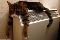 A cat tries to stay cool. I wish I could lie on an air conditioner like that. (Courtesy of ICN message board.)