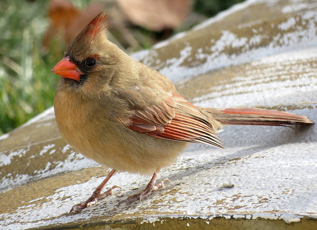 Fledgling Romance: Why Some Birds Feed their Mates | The ...