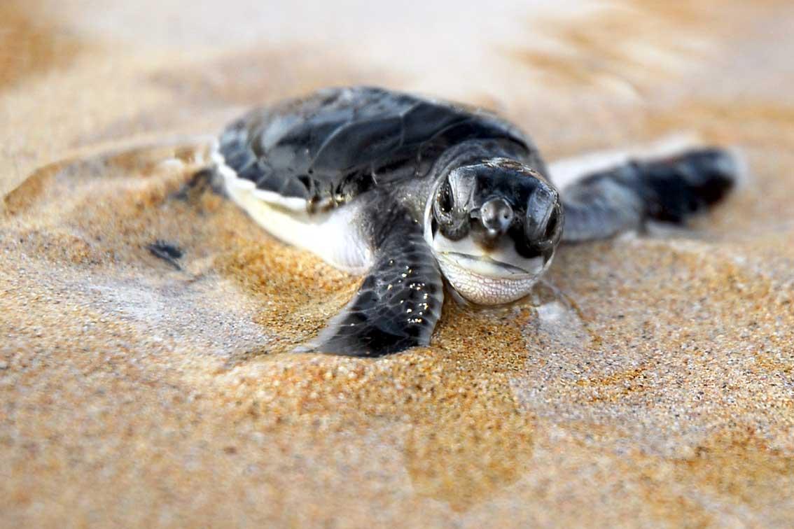 Sea Turtle Season And How I Became A Grade School