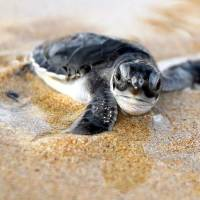 Sea Turtle Season and How I Became a Grade School Misanthrope