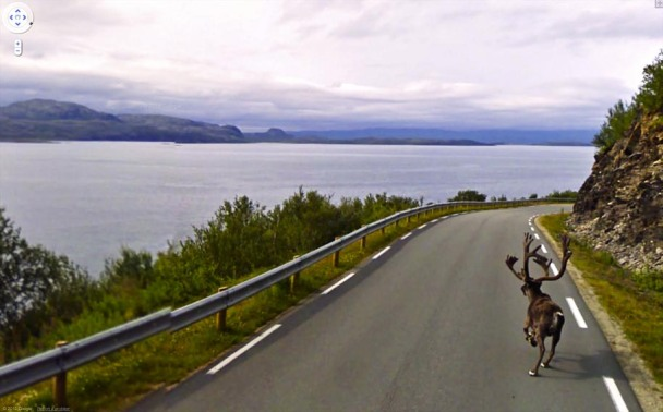A reindeer in Lebesby, Norway. One of many great accidental wildlife shots from Google Maps.